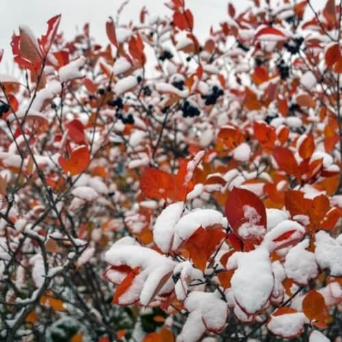 Фото дня 16.10 Зима vs Осень (@Леонид Логинов)