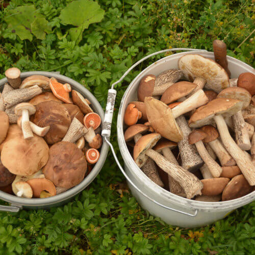 Фото дня 13.08. Шалинские грибочки